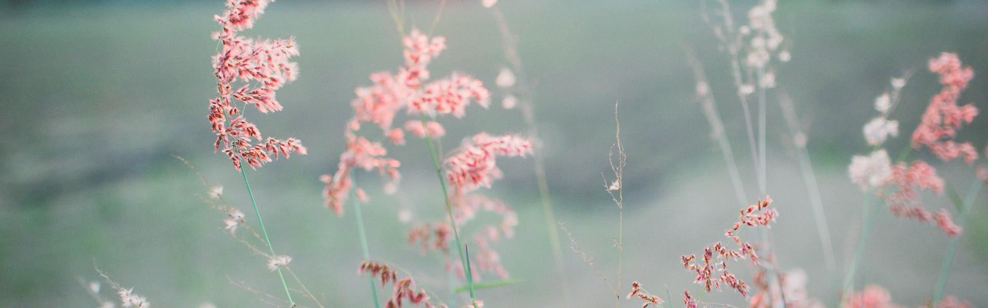 Slide_flower71